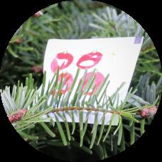 6 Sachets Treefresh Tabs + Verzorgingstips